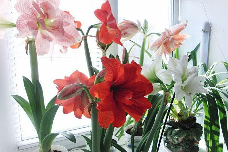 каталог комнатных цветов12