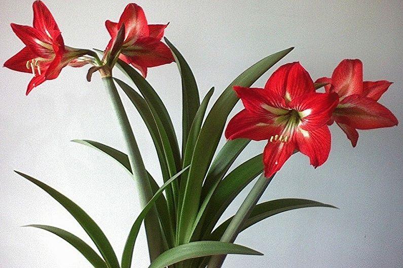каталог комнатных цветов10