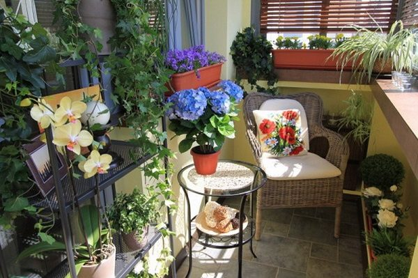 зимний сад в квартире3