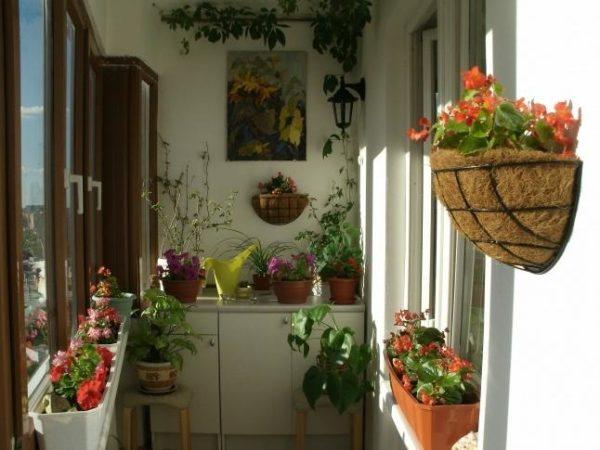 зимний сад в квартире6