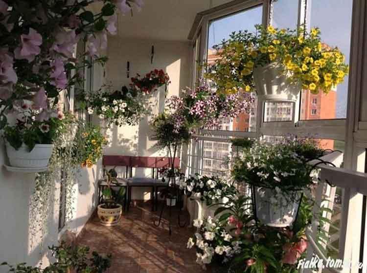зимний сад в квартире22