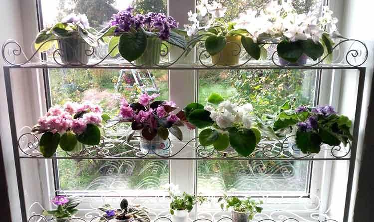 пластиковые окна потеют14